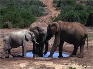 EC_02_Addo_elephants_DJ