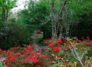 EC_03_The Arboretum_ Hogsback in spring_SHoppe