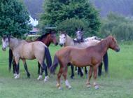 Lowveld Lekog_Horses of Kaapscherhoop_Author MPitman