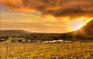 04_Cape-Winelands